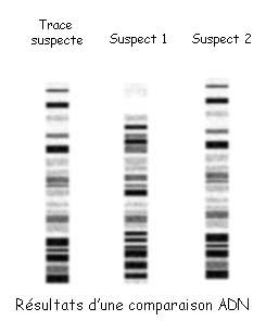 source: http://www.police-scientifique.com/